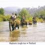 โปสการ์ด ขี่ช้างเที่ยวป่า ช้างไทย (CH189)