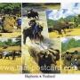 โปสการ์ด ช้างไทย (CH190)