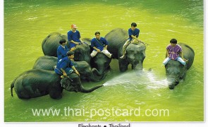โปสการ์ด ช้างไทย