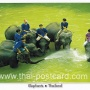 โปสการ์ด ช้างไทย (CH191)