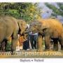 โปสการ์ด ช้างไทย (CH200)