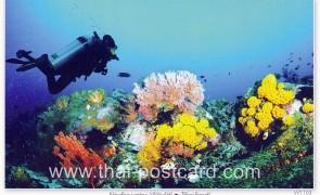 โปสการ์ด ใต้ท้องทะเลไทย